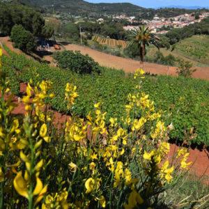 Azienda Agricola Arrighi